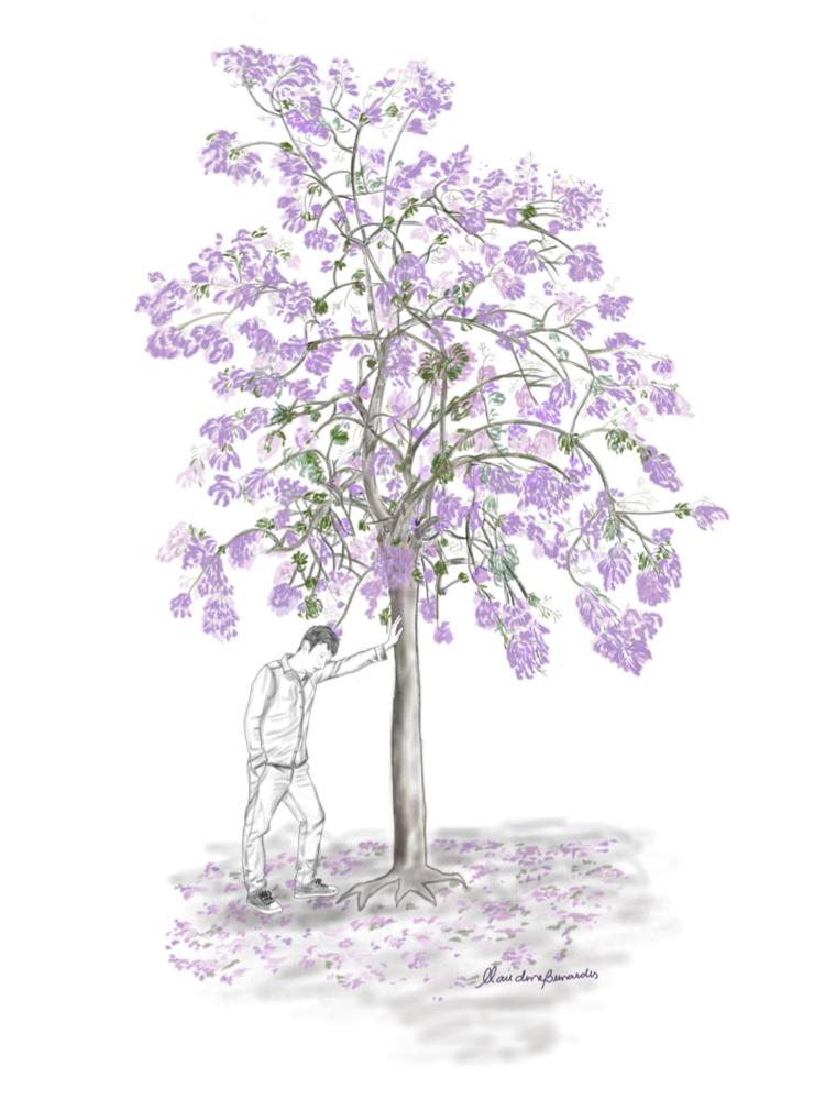 Jacarandá flor lilás a caixa de imaginação